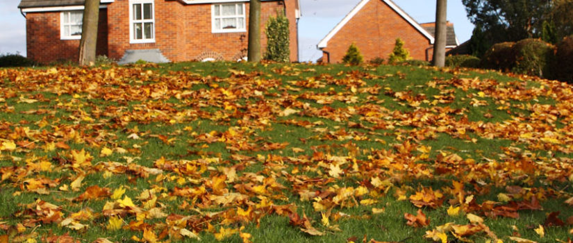 Best Ways To Clean Up Leaves In Taylors Sc Nichols Lawn
