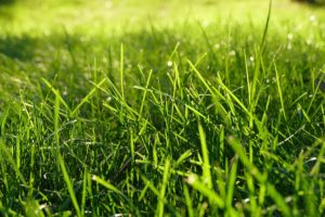 grass and lime Photo: imaginaryhuman