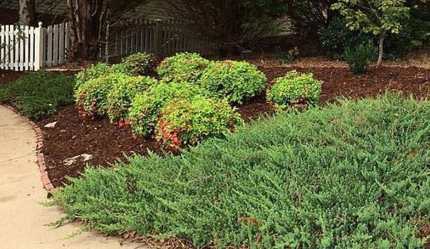 Mulch in Greenville SC
